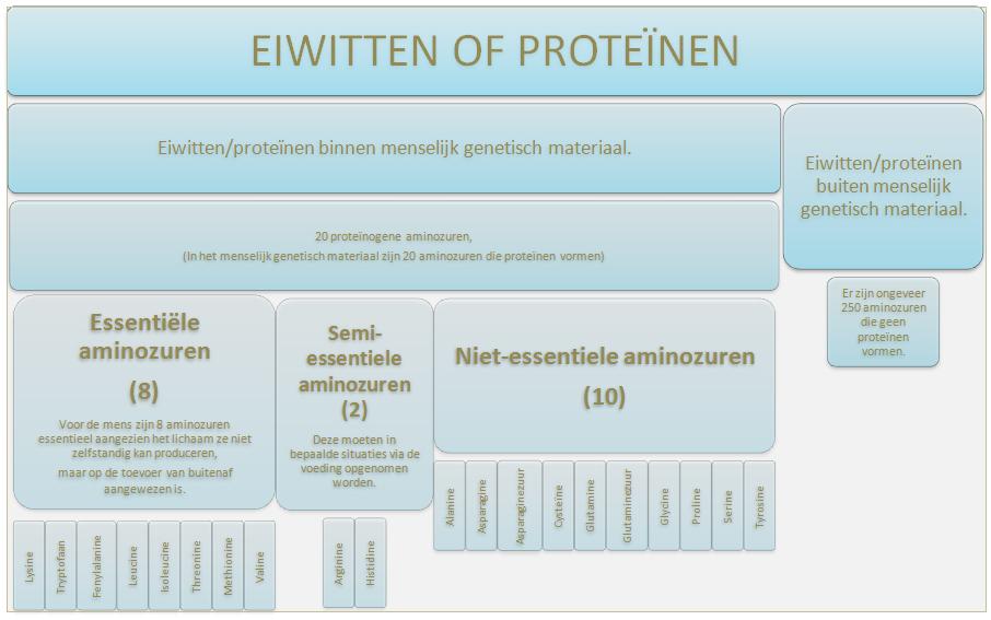wat zijn proteine
